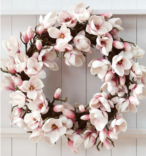 corona magnolia