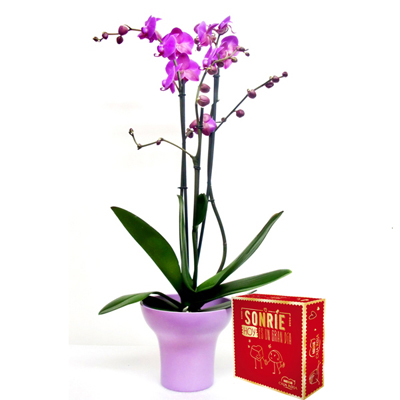 Planta orquidea rosa y bombones